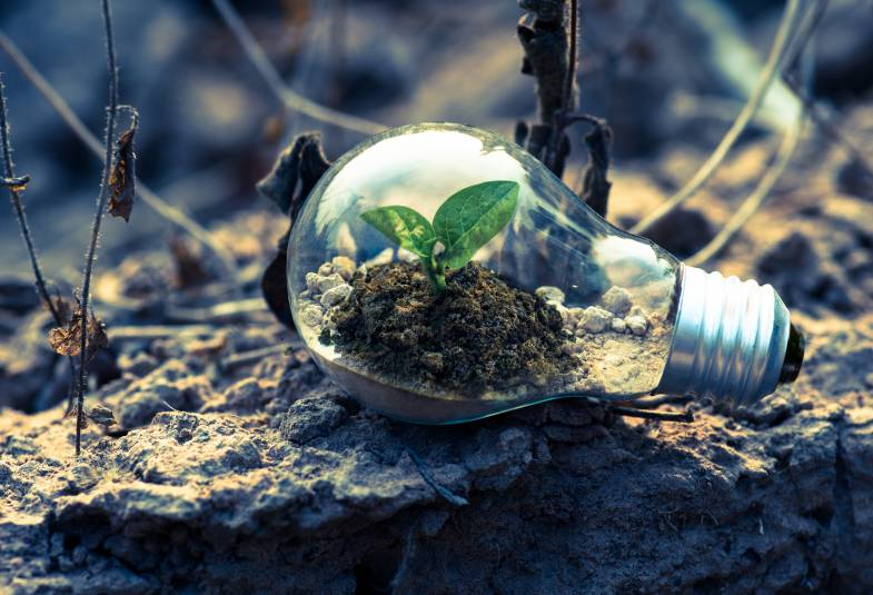 Small green leafy plant grows out of dirt inside a light bulb