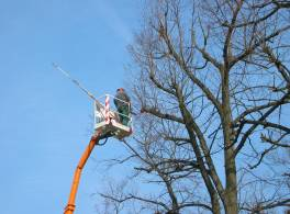 Man in a crane lift fells trees