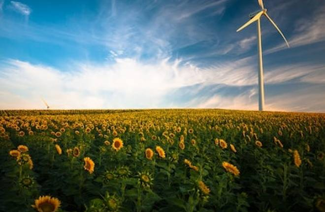 Field of sunflowers with a wind turbine